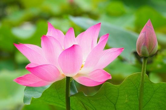 botanical-garden-2844202_640